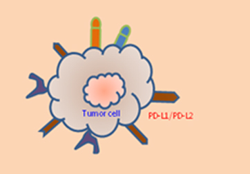 Target-Activated NK (TANK™) Cell Therapy